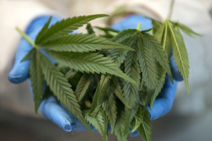 Israel biopharma cannabis research